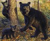 BLACK BEAR AND CUBS -OSO NEGRO Y OSESNOS -